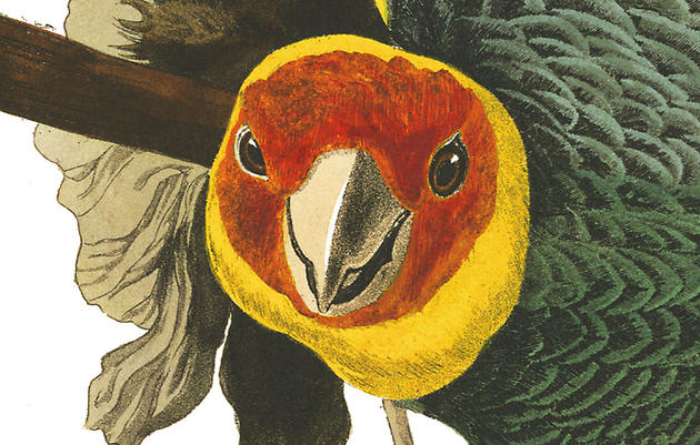 What Drawings of Birds and Brillo Pads Tell Us About Ourselves