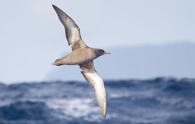 Going the Distance: 5 Champion Migrators