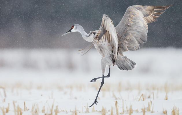 Vital Bird Protections Move Forward in Congress