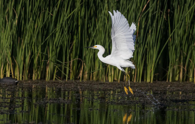 Prioritizing Water Security for Arizona's Birds and People