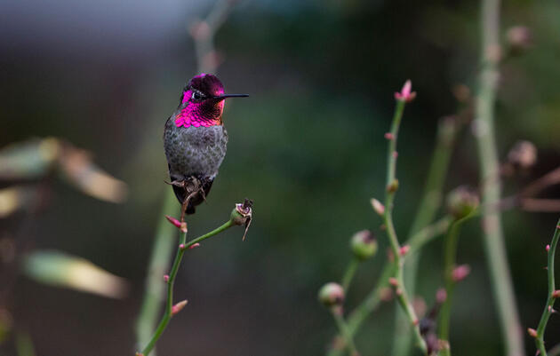 Quiz: What Do You Know About Birds and Plants?