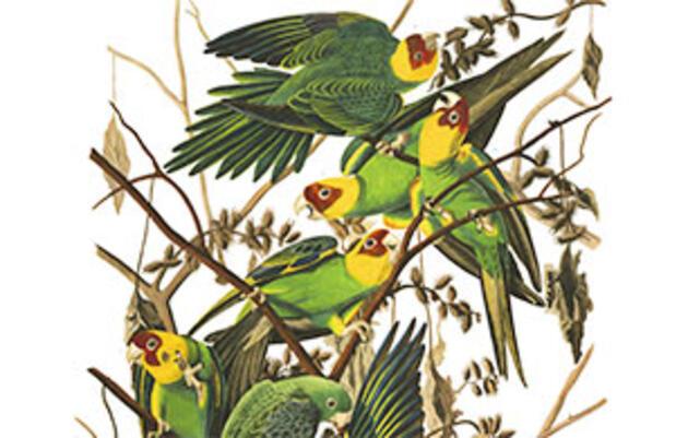 We Now Know the Real Range of the Extinct Carolina Parakeet