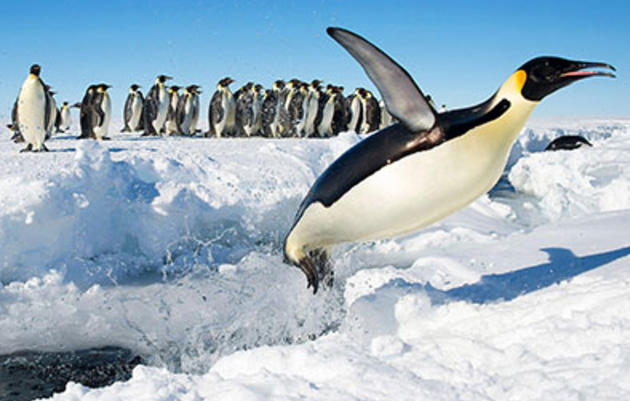 10 Cool Reasons To Celebrate Penguins