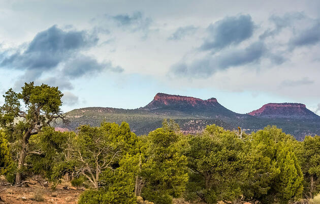 New Plan for Bears Ears National Monument Draws Fire over Tree-Clearing