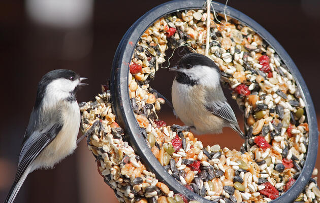 Want to Attract Beautiful Backyard Birds? Try These Tailored Recipes