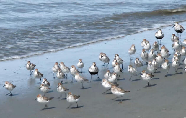 Shorebirds 101: What to Look for When You Hit the Water