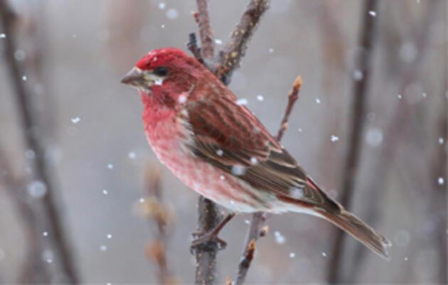 Audubon Endorses Bipartisan Bill to Encourage Climate Innovation