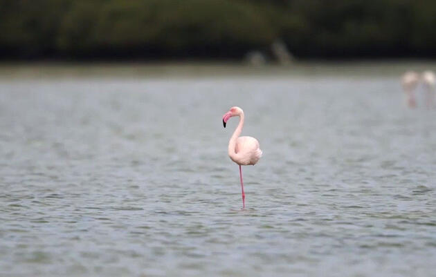 How Flamingos Stand on One Leg Without Falling Over