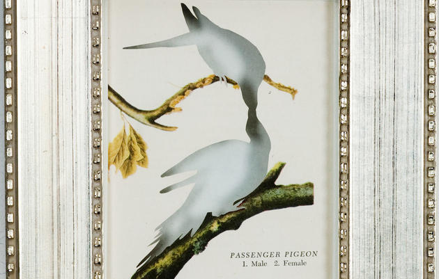 Reimagining the Passenger Pigeon