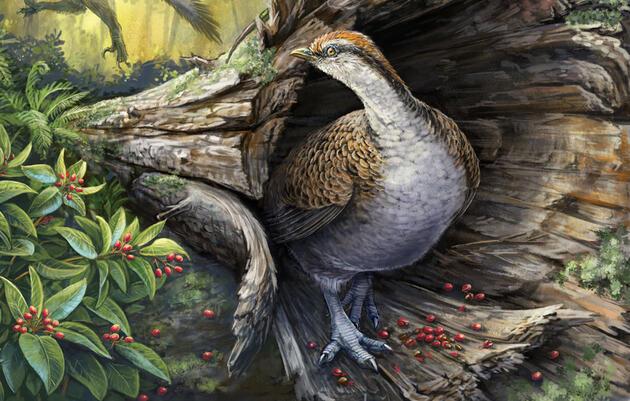 How Did Bird Ancestors Survive the Apocalypse?