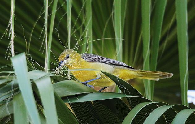 Las aves dependen de las plantas autóctonas, y nuestras fotos deben reflejarlo