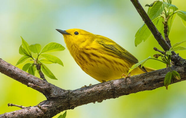 Six Eye-Catching Warblers That Deserve Your Attention