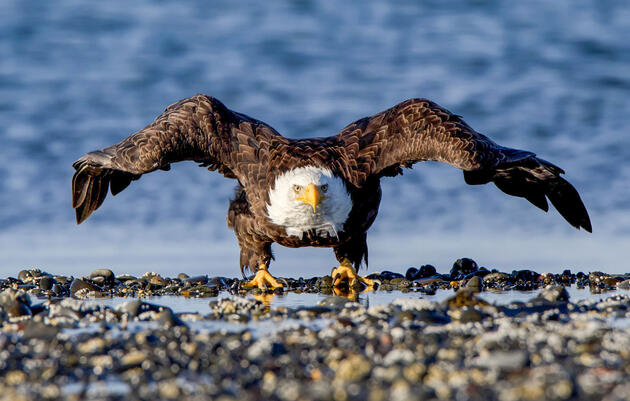We're Suing the Federal Government to Protect Birds