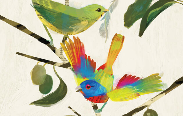 Reimaginando al colorín sietecolores de John James Audubon