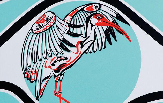 Reimaginamos al Ibis Blanco Americano