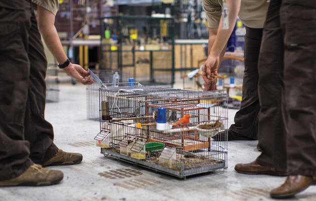 Meet the Undercover Crime Unit Battling Miami's Black Market of Birds