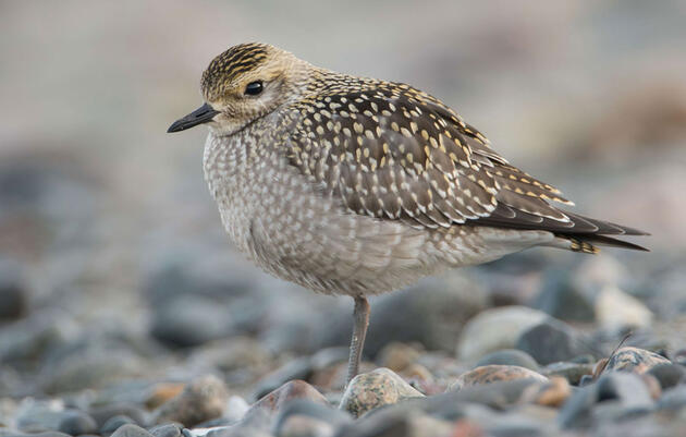 Seven of the Best Spots for Photographing Migrant Shorebirds in the U.S.