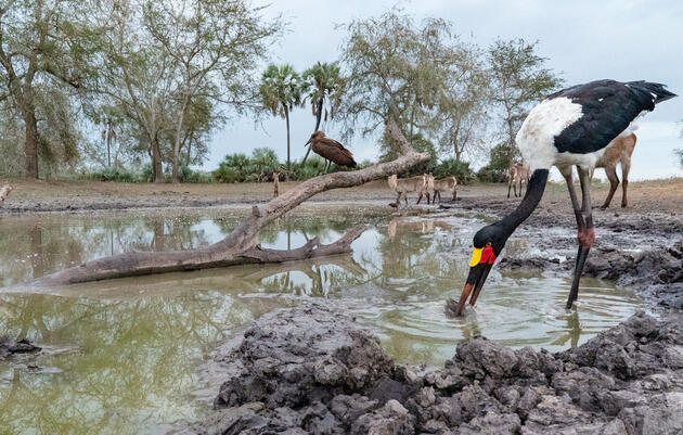 Get Started With Camera Traps to Nab Unusual Bird Photos