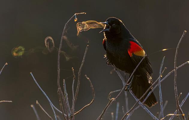 2019 Audubon Photography Awards Marks 10th Year of Exquisite Bird Photography