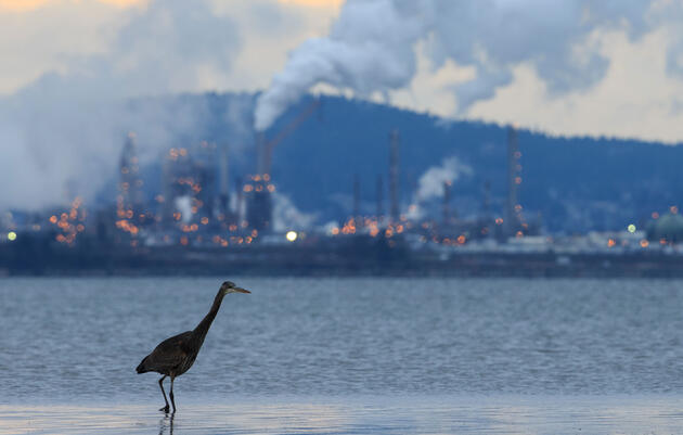 Why Climate Change Is a Bird Issue