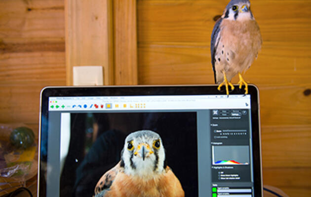 The Dos and Don'ts of Editing Bird Photos