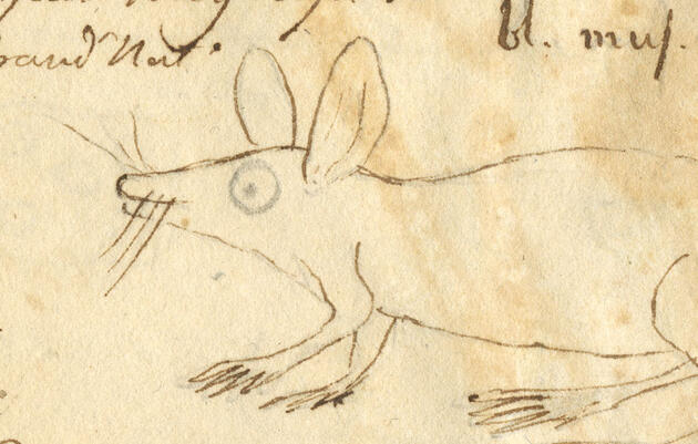 Birder, Painter, Troll, and Trickster—The Secret Life of John James Audubon