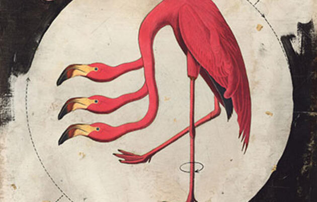 Reimagining the American Flamingo
