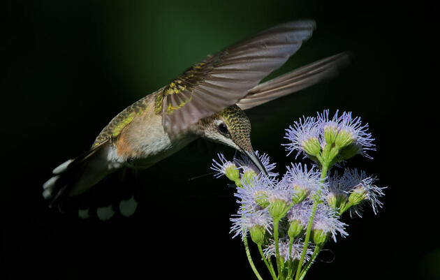 Birds in the Air: Talking Conservation and Christianity With the Next Generation