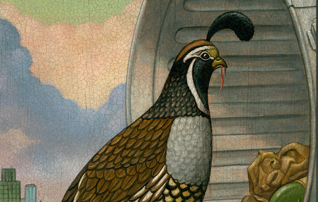 Reimagining the California Quail