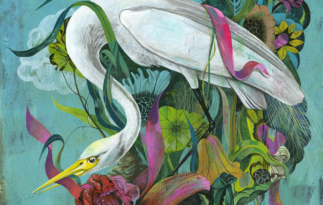 Reimagining the Great Egret