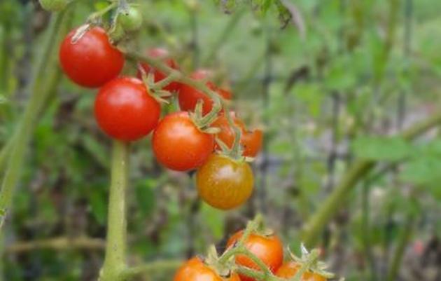 Women Greening Food