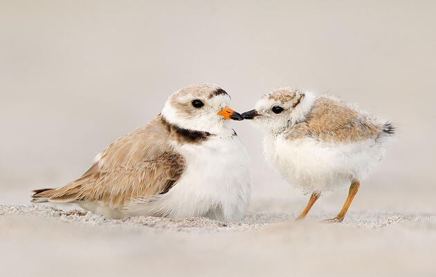 How to Become a Bird-friendly Beachgoer