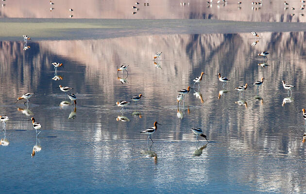 From Toxic Dustbowl to Vital Bird Sanctuary