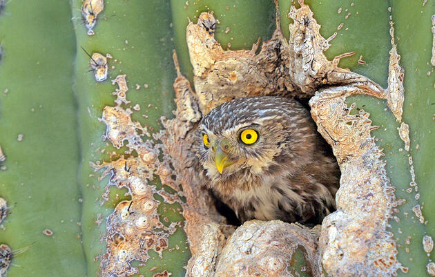 Why the Border Wall Is a Problem For Birds, Despite Their Wings