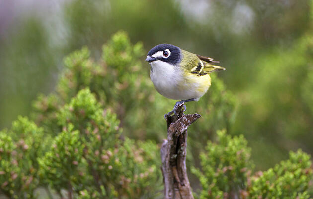 Plot Twist: Congress Is Considering a Law That Could Protect Hundreds More Birds