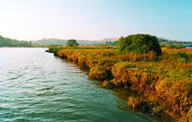 A makeover turns manmade Aramburu Island into rich wildlife habitat. Brown W. Cannon III