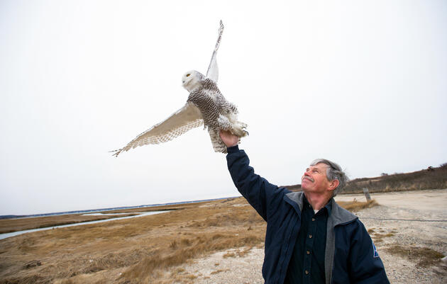 Snowy Owls at Airports Are Often Shot—But They Don't Have to Be