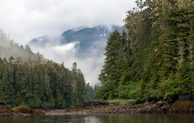 Plan to Lift Roadless Protections Will Likely Cause Extinctions in Alaska's Tongass