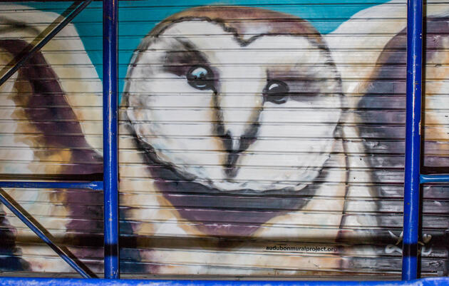 Barn Owl by Lexi Bella