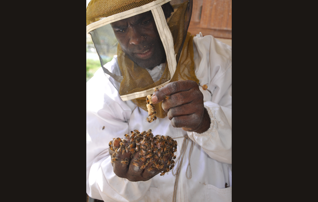 Organic Honey Is Creating a Buzz in the U.S. Virgin Islands