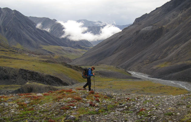 Across Rivers, Seas, and Mountain Peaks, A Wildlife Biologist Brings Us on an Odyssey
