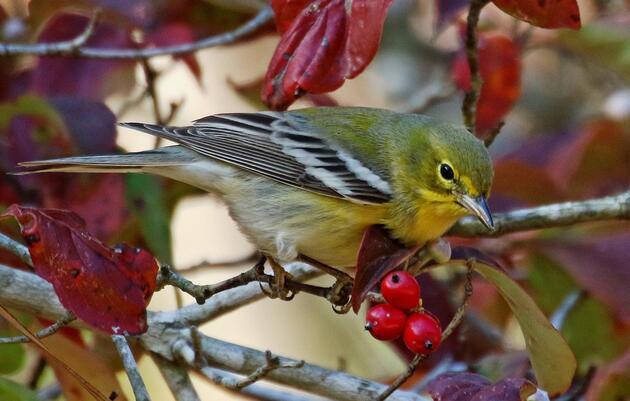 Celebrate Native Plants Week with Audubon
