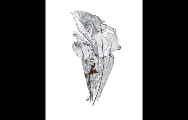 Decaying Leaf Giles Revell