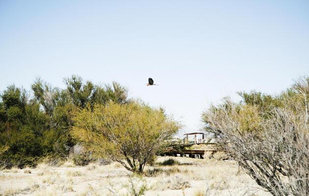 Birding in Nevada