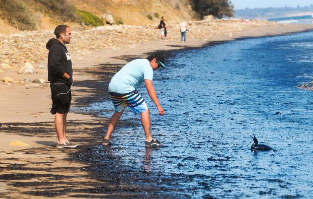 Santa Barbara Oil Spill Hits the Coast