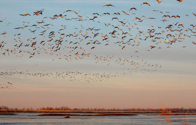 Sandhill Cranes fly over the Platte River area. Mike Fernandez/Audubon