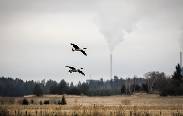 What Can Birds Tell Us About Air Pollution?
