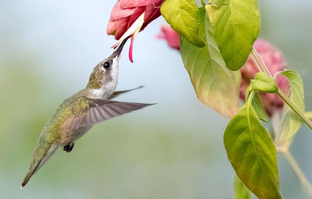 How Do Birds Taste Their Food?