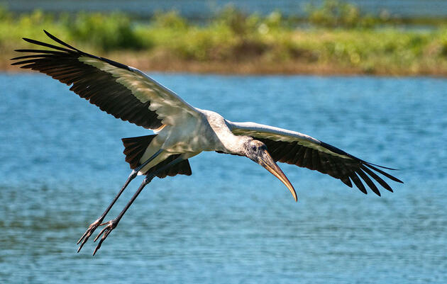 Florida's Wading Birds Had a Terrible Breeding Season Last Year