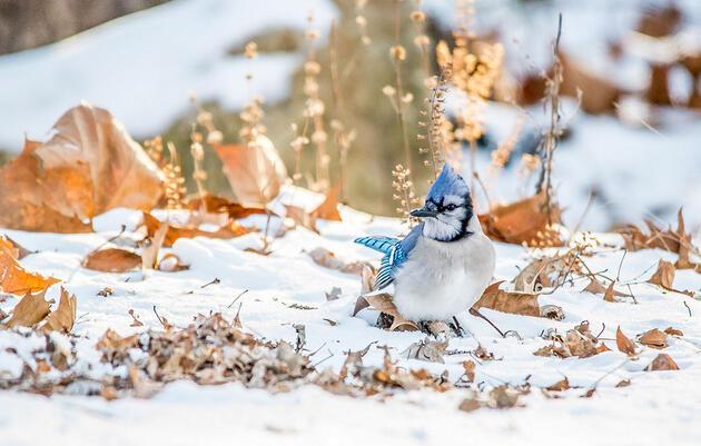 Para ayudar a las aves este invierno, tómese el trabajo de jardinería con calma en el otoño